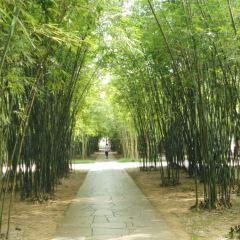 Foshan Zhongshan Park User Photo