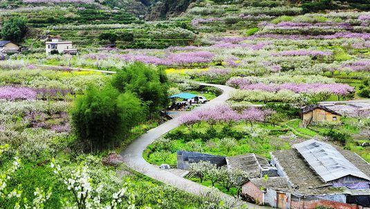Jiufeng Town Flower Sea