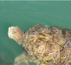 Grand Cayman Turtle Farm User Photo