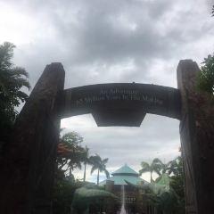 Manawaiopuna Falls (Jurassic Park Falls) User Photo