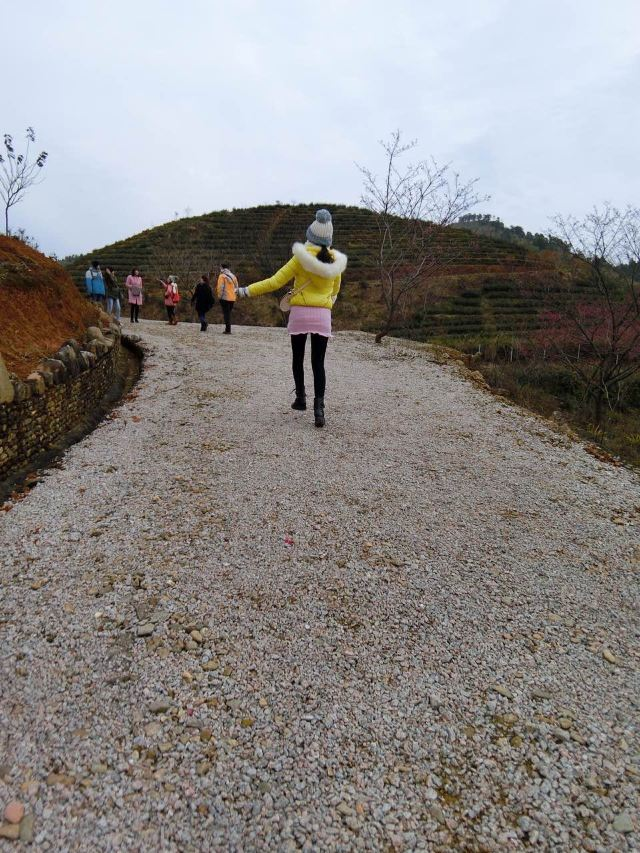 신펑잉화위