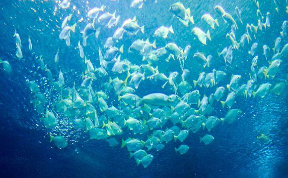 吉隆坡城中城水族館 KLCC Aquaria 門票