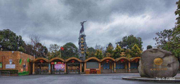 Chengdu Zoo3