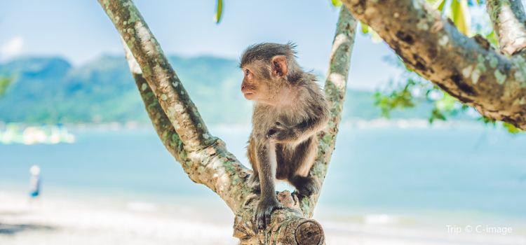 Monkey Island3