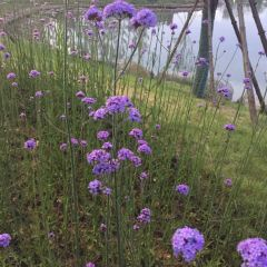 Sturdy Cypress Garden User Photo
