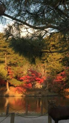 瑞宝寺公园-神户-小王紫