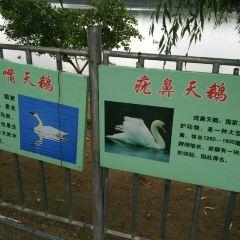 백조의 호수 관광지구 여행 사진