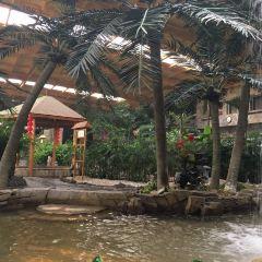 錦泰溫泉度假酒店生態餐廳用戶圖片
