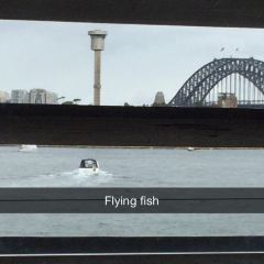 Flying Fish User Photo
