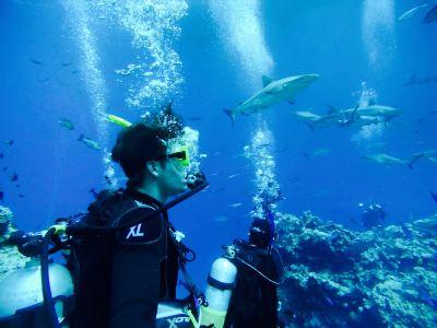 深海自由號精品潛水之旅
