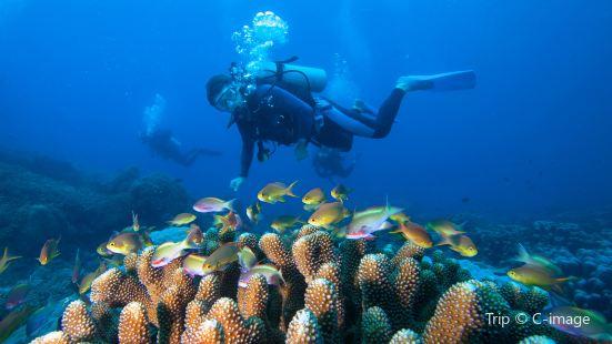 Dadonghai diving