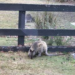 사우스 브루니 국립공원 여행 사진