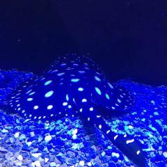 Seaview Aquarium User Photo