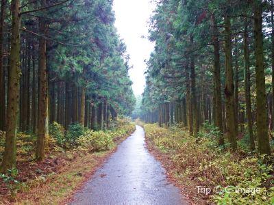 Saryeoni Forest Path