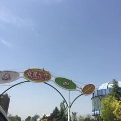 태산화양연화 여행 사진