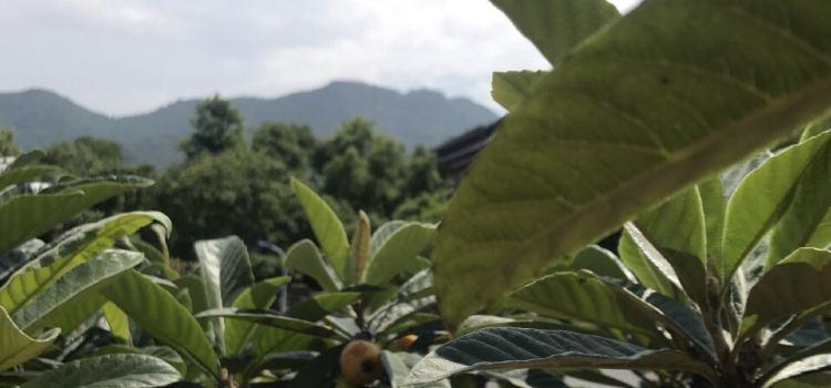 杭州生態園1