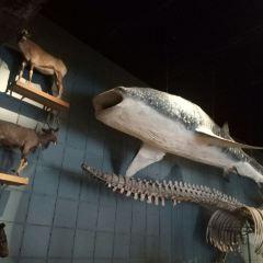 浙江自然博物館用戶圖片