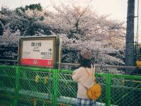 友達十年的東京賞櫻之旅,順便辦了三年簽