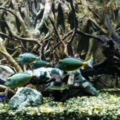 Hippocampus Fantasy Aquarium User Photo