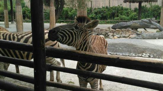 野生動物園上野餐廳