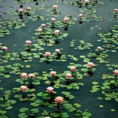 Asean Sculpture Garden User Photo
