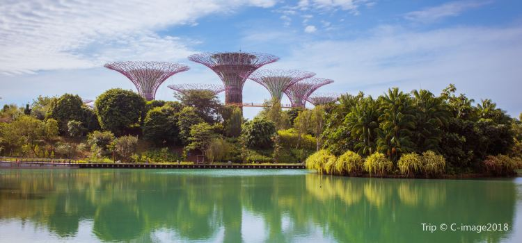 Gardens by the Bay1