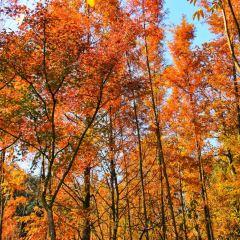 九溪煙樹用戶圖片