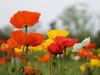 百花生辰,4月的杭州又多了一個賞花聖地