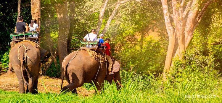Maesa Elephant Camp1