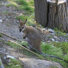 Willowbank Wildlife Reserve User Photo