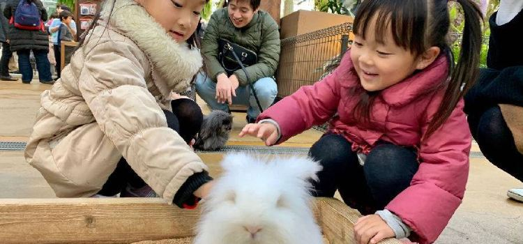 Kobe Animal Kingdom