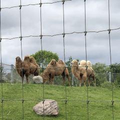 Toronto Zoo User Photo