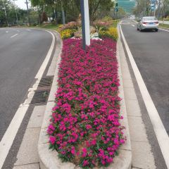 Guangzhou International BIO-Island User Photo