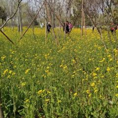 蘭陵國家農業公園用戶圖片