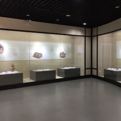 蕭山博物館用戶圖片