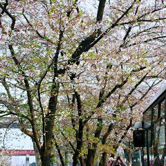 Nanpu Bridge User Photo
