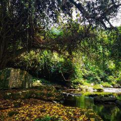 Rare Botanical Garden User Photo