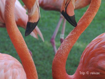 Rand Nature Centre - Bahamas National Trust