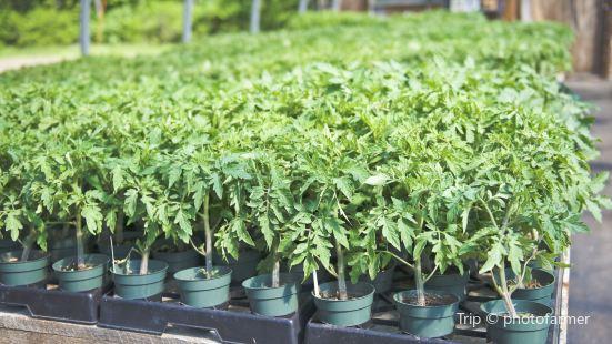 The Ark Herb Farm
