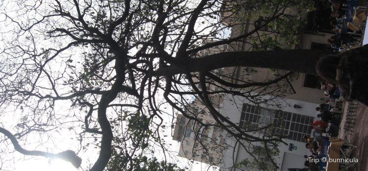 Plaza Dorrego3