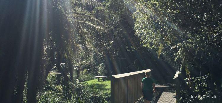 Hamurana Springs Recreation Reserve3