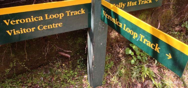Veronica Loop Track