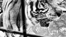 苏比克野生动物园