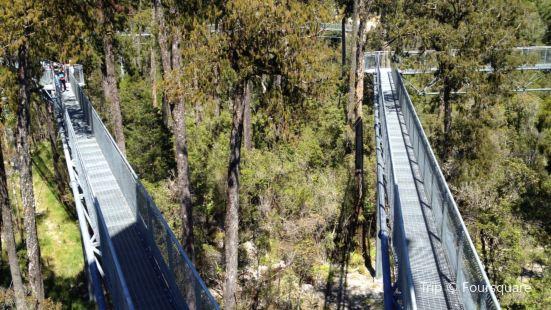 West Coast Treetop Walkway