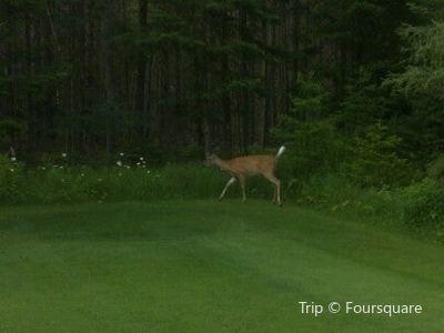 Inlet Golf Club