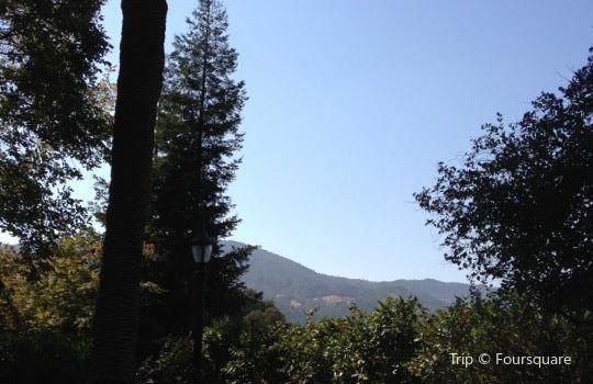 Sequoia Grove2