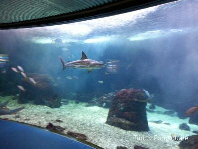 Seatour - Aquarium de Guadeloupe