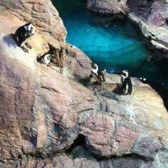 新英格蘭水族館用戶圖片