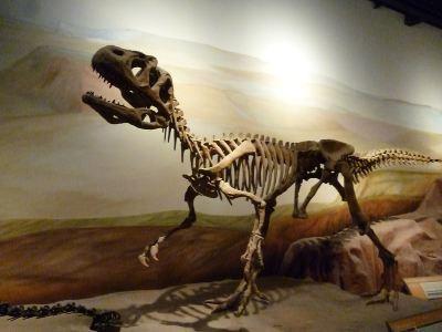 Paleontological Museum Egidio Feruglio