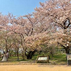 舞鶴公園用戶圖片